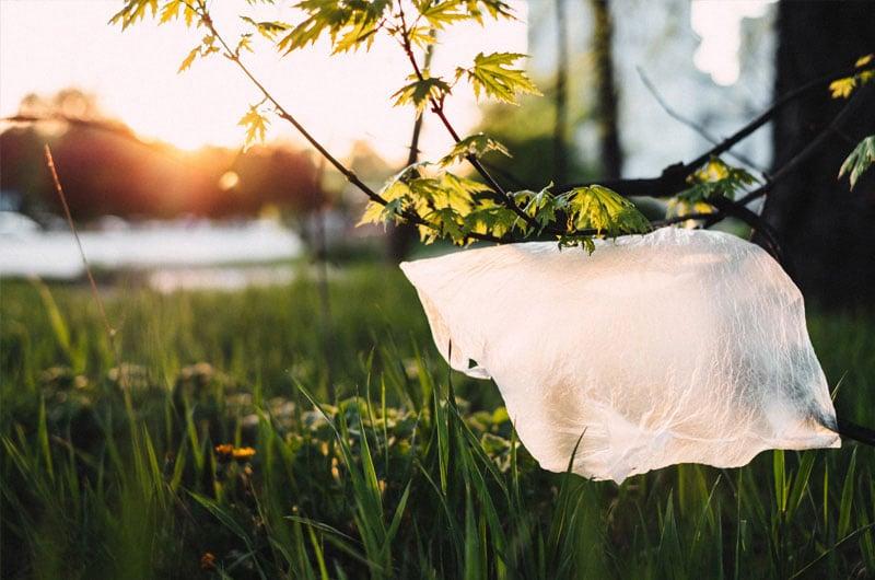 Sacchetto-di-plastica-incastrato-du-ramo-di-albero-inquinamento-ambientale-da-plastiche