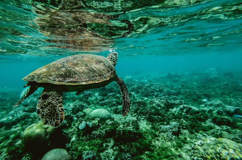 oceano salute laica tartaruga
