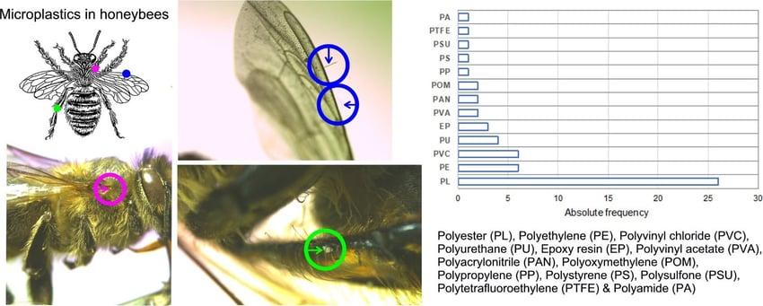 risultati ricerca api microplastiche